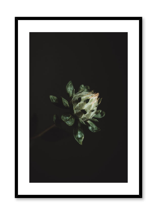 Minimalist design poster by Opposite Wall with Blooming Plant photography