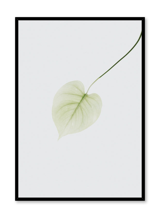 Minimalist design poster by Opposite Wall with Pothos Leaf photography