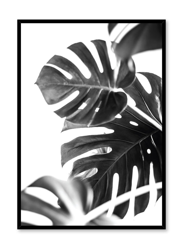 Modern minimalist art print by Opposite Wall with Monstera leaves art photo design in black and white
