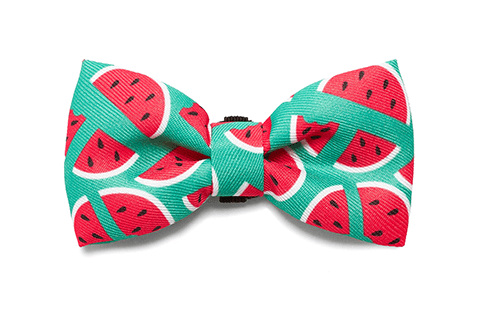Bali the Dog Zeedog Lola Bow Tie for those James Bond moments or any party outfit or dog party. Cool dog gear!