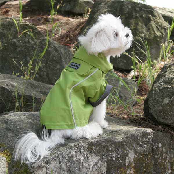 Small dog raincoat green full length rear view silhouette