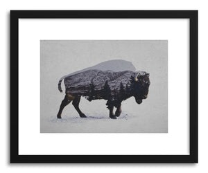 Fine art print The American Bison by artist David Iwane