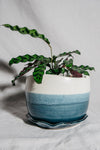 French Blue & Alabaster Wave Planter | Medium