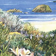 Costal Wildflowers - Note card