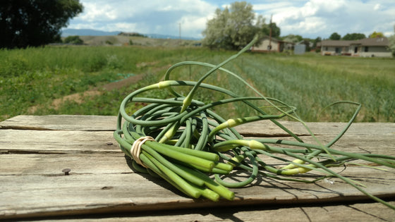 Zach's Garlic Scapes (/bunch)