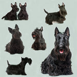 Dog Fabric, Scottish Terrier on Green, Cotton or Fleece 1630