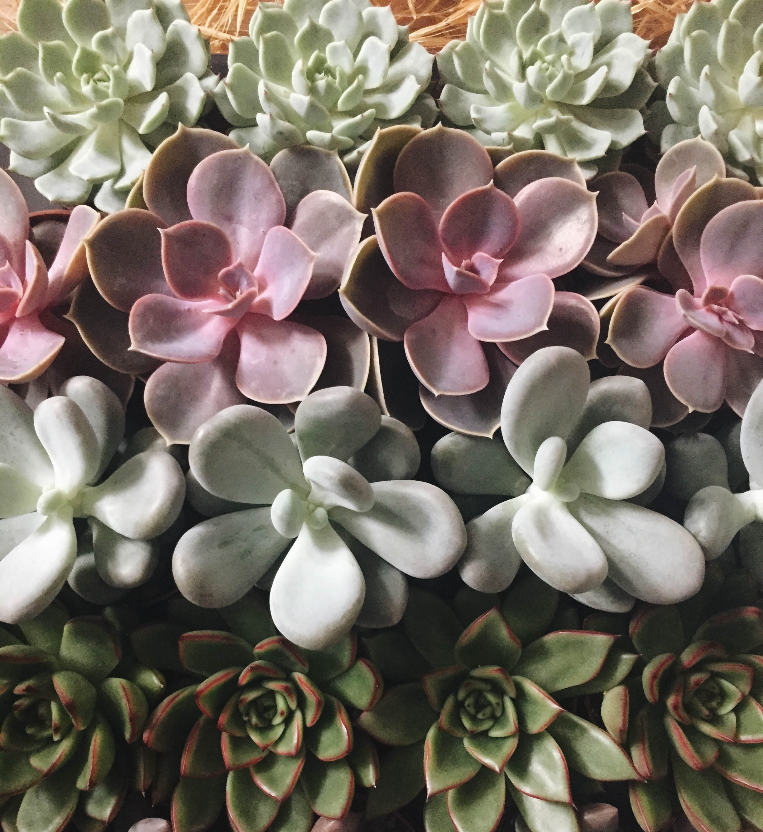 Plant notes | Succulents & Cacti