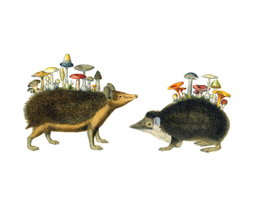 Unnatural History (Hedgehogs)