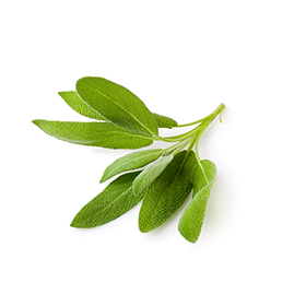 SAGE EXTRACT (SALVIA OFFICINALIS)