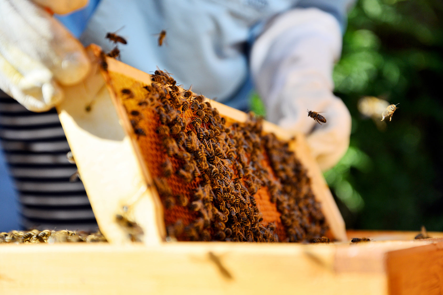 How Honey is Made: 5 Steps Behind the Sweet Stuff