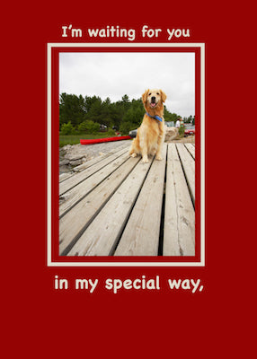 52370 Valentine from Golden Retriever Valentine from Golden Retriever