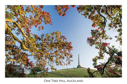549 - Post Art Postcard - One Tree Hill, Auckland