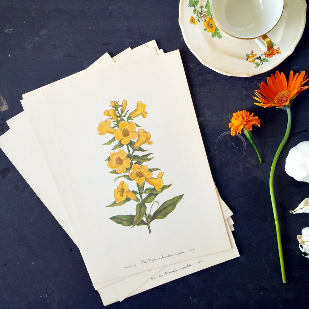 Collection of Nine Vintage 1950s Botanical Prints - You Choose Color - Art for Wall Collages