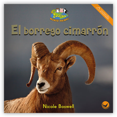 El borrego cimarrón from Zoozoo Mundo Animal