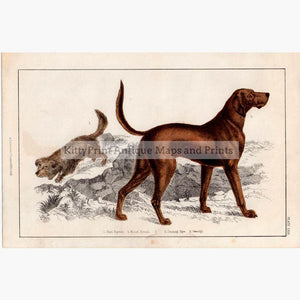 Blood Hound Skye Terrier c.1848 Prints KittyPrint 1800s Dogs