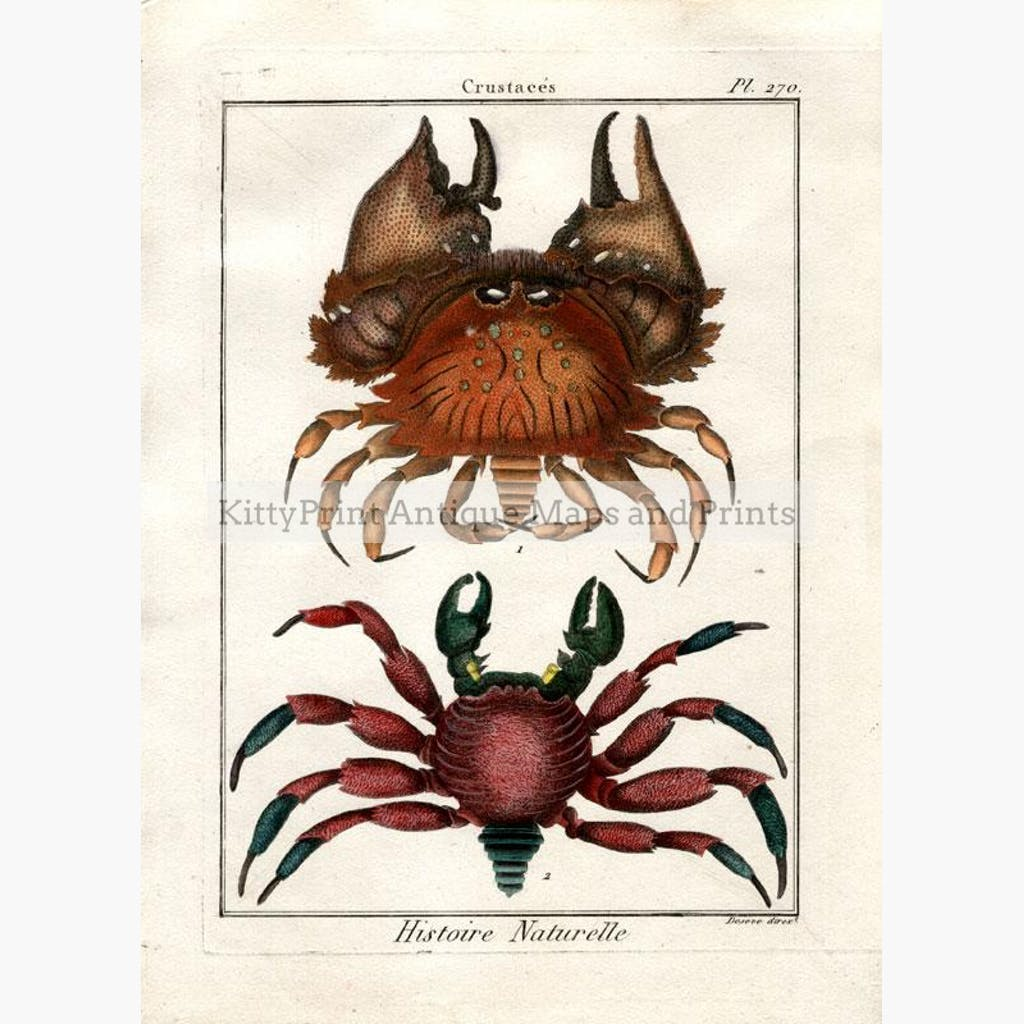 Crabs Crustaces. Histoire Naturelle plate 270 c.1790. Prints KittyPrint Corals & Molluscs