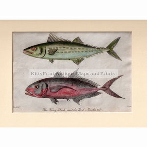 King Fish And The Red Mackarel,1806 Prints