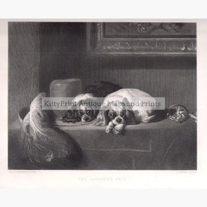 The Cavalier's Pets c.1880 Prints KittyPrint 1800s Dogs