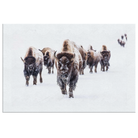 Bison Baffalo Wall Art