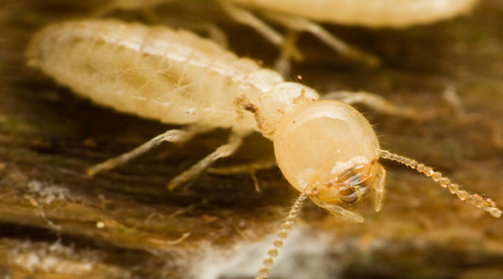 Think Your Home May Have A Termite Problem?