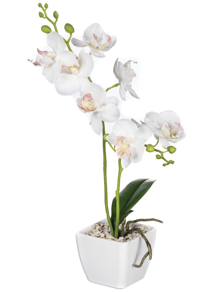 "Sullivan 14"" Mini Orchid Pot"