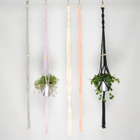 THE 'PRIMULA' PLANT HANGER