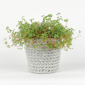 THE 'HYSSOP' PLANT POT //grey//