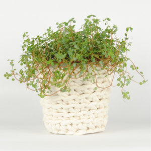THE 'HYSSOP' PLANT POT //ivory//