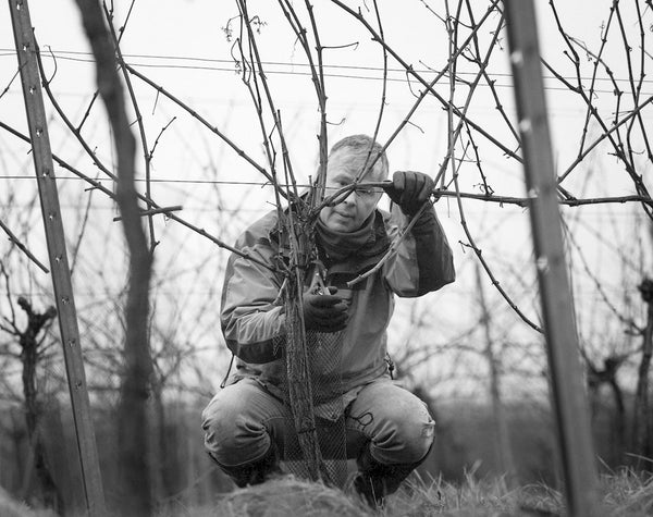 Pruning can take us up to 4 months.