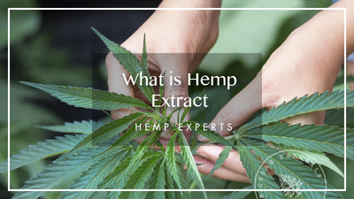 What is Hemp Oil Extract