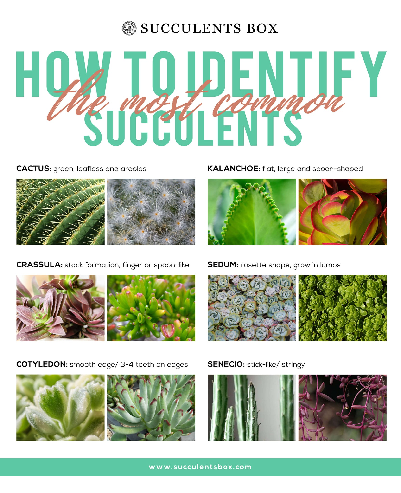 How to identify types of succulents
