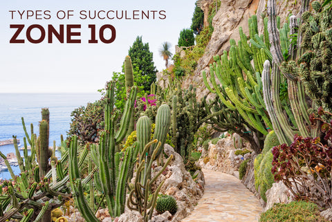 Succulents Hardiness Zone 10