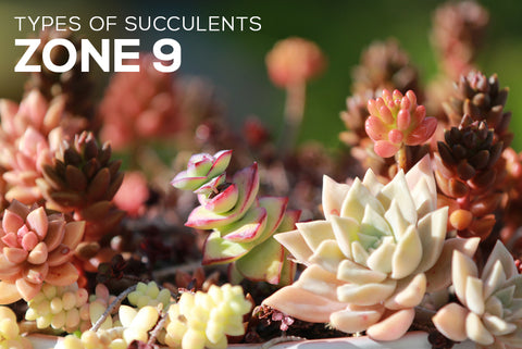 Succulents Hardiness Zone 9