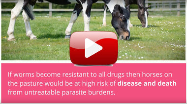 <h3>Explainer Video: Worm Resistance in Horses</h3>