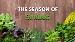 Bundle 4: Introduction + Spring: Season of Liver and Gallbladder