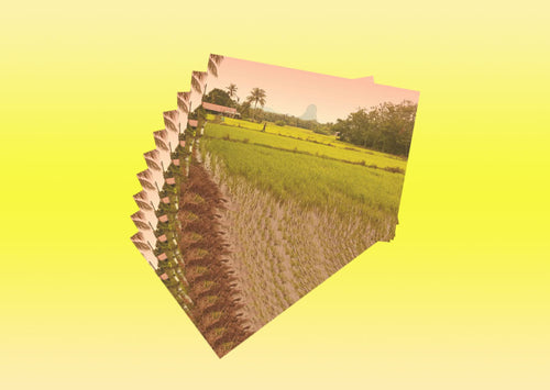 10 pieces - Paddy Field in Perlis