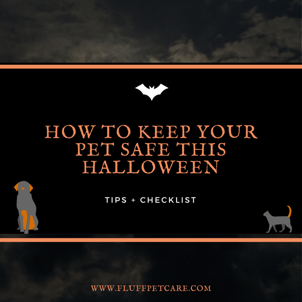 How to Keep Your Pet Safe This Halloween (Tips and Checklist)