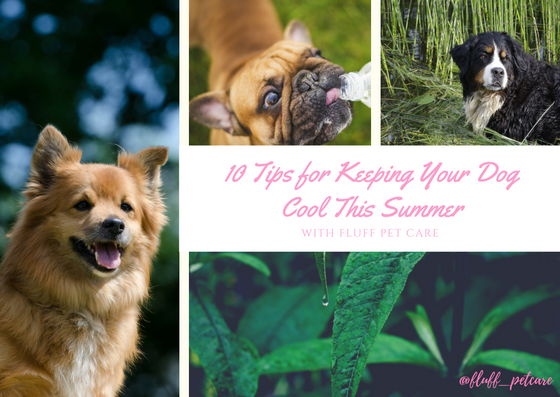 10 Tips for Keeping Your Dog Cool This Summer