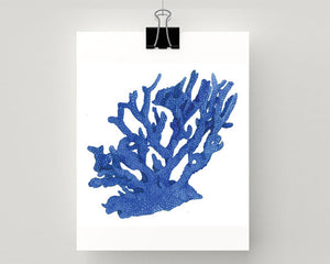 Print of coral in blue accents