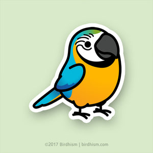 Chubby Blue & Gold Macaw Stickers