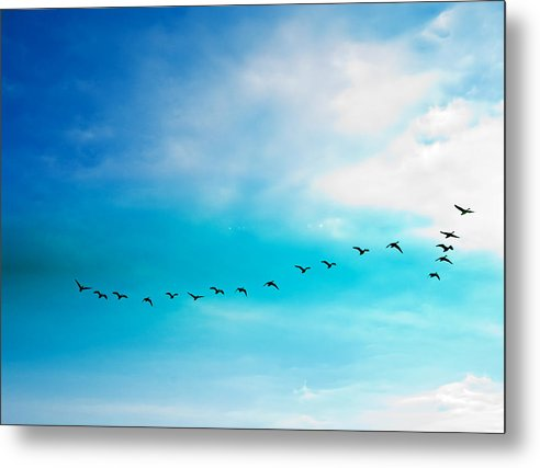 Flying Away - Metal Print