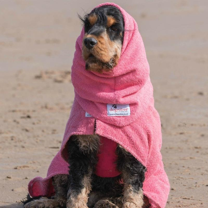 Cocker Spaniel Wearing Pink Snood and Dogrobe