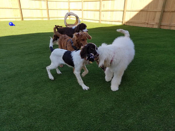 DAYCARE: HAPPY DOG 10-pack