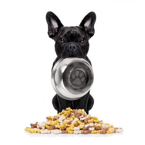 french bulldog eats fast