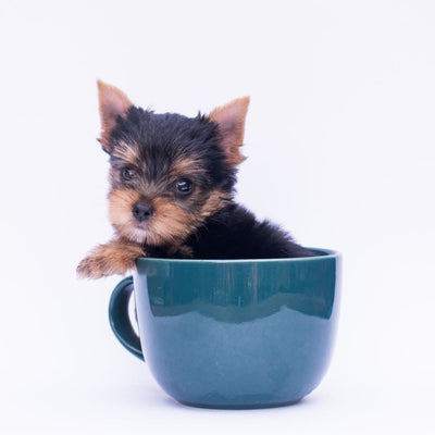 Puppy Specialists - All Breeds!