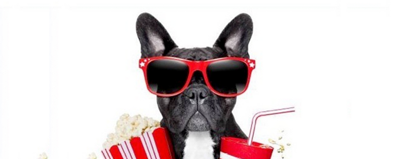 BARKHAPPY HOUSTON DOGGY MOVIE NIGHT