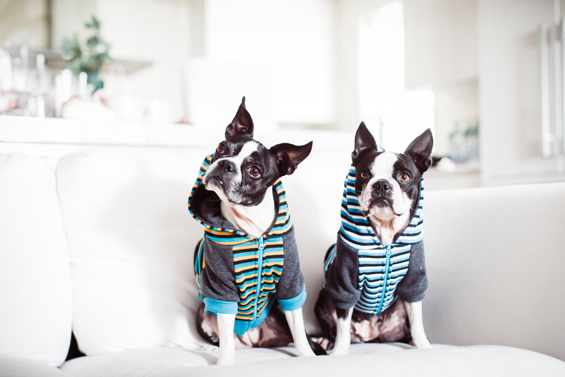 Frenchie Dog Hoodie - Classic Blue Stripe