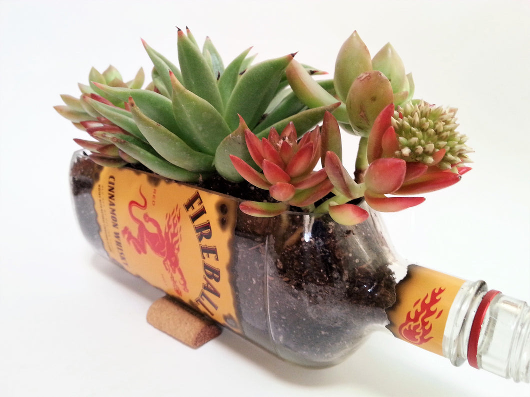 Whisky Succulent Planter