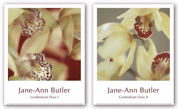Cymbidium Flow Set by Jane-Ann Butler