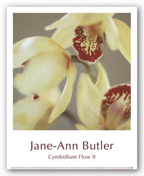 Cymbidium Flow II by Jane-Ann Butler